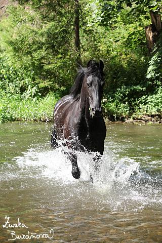 V zelené řece