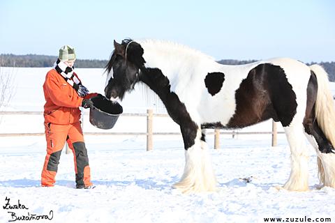 Iva ja sammalta Stallion