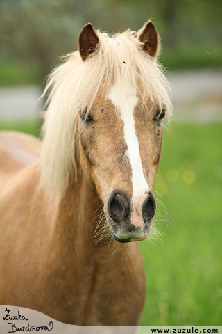 Pony Deny